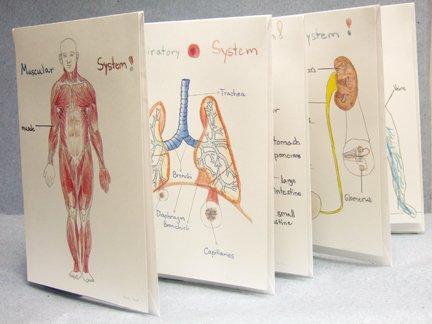 human body systems book pdf