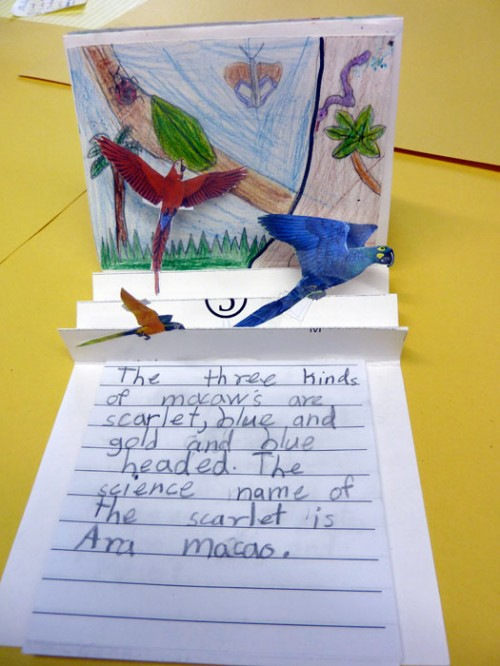 Did You Know Macaws Can Fly at 35 mph? – Bookmaking With Kids